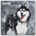 Siberian Husky 2022 Wall Calendar