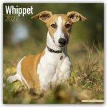 Whippet 2022 Wall Calendar
