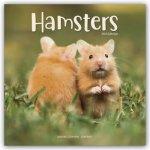 Hamsters 2022 Wall Calendar