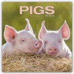 Pigs 2022 Wall Calendar