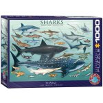 Puzzle 1000 Sharks 6000-0079