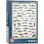 Puzzle 1000 Freshwater Fish 6000-0312