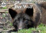 Im Rudel Zuhause - Der Wolf (Tischkalender 2022 DIN A5 quer)