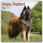 Belgian Shepherd Dog 2022 Wall Calendar