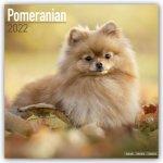 Pomeranian 2022 Wall Calendar