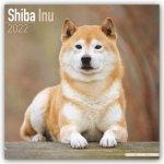 Shiba Inu 2022 Wall Calendar