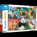 Puzzle 1000 Królestwo zwierząt 10672